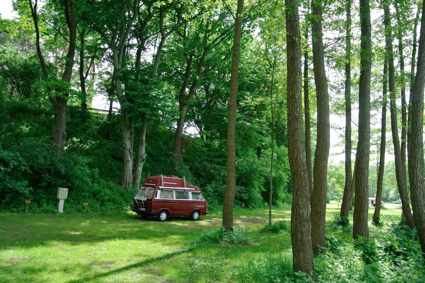 unter Bäumen