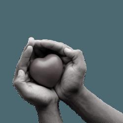 Volontariato - No profit